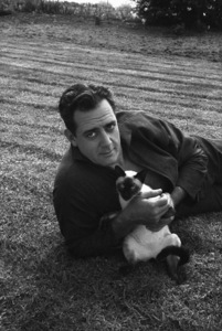 Raymond Burr at home with his Siamese catcirca 1960s© 1978 Gene Trindl - Image 2136_0046