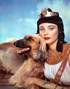 """The Egyptian""Gene Tierney1955 Twentieth Century Fox**I.V. - Image 21496_0001"