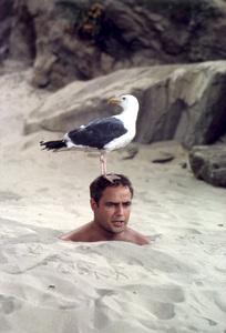 """Bedtime Story""Marlon Brando 1964 Universal Pictures © 1978 Leo Fuchs - Image 22003_0002"
