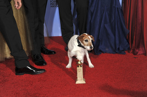 """""""The Golden Globe Awards - 69th Annual"""" (Press Room) Uggie1-15-2012 © 2012 Jean Cummings - Image 24150_0148"""