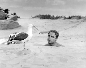 "Marlon Brando in ""Bedtime Story""1964 Universal** B.D.M. - Image 24293_0122"