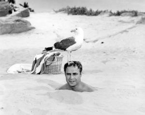 "Marlon Brando in ""Bedtime Story""1964 Universal** B.D.M. - Image 24293_0123"
