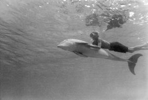 "Luke Halpin in ""Flipper""1963 MGM** B.D.M. - Image 24293_1339"