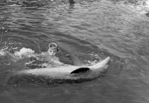 "Luke Halpin in ""Flipper""1963 MGM** B.D.M. - Image 24293_1340"
