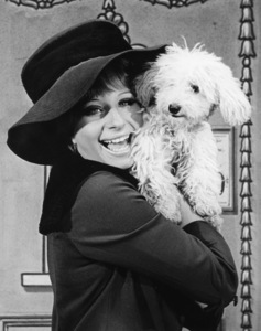 """Original caption reads: Actress Barbra Streisand hugs her baby poodle after she was presented with it as a 23rd birthday gift by the cast of """"Funny Girl"""" in which she stars. Barbra promptly named it """"Sadie"""" after the title of a song she sings in the show 1965** B.D.M. - Image 24293_2545"""