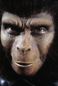 """Beneath the Planet of the Apes""Kim Hunter1969© 1978 Richard R. Hewett - Image 24328_0069"