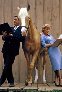 """""""Mister Ed""""Alan Young, Connie Hinescirca 1960© 1978 Richard R. Hewett - Image 24328_0104"""