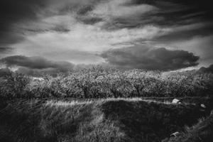 Cherry Blossoms off Highway 5, California2016© 2016 Jason Mageau - Image 24361_0112