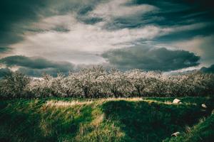 Cherry Blossoms off Highway 5, California2016© 2016 Jason Mageau - Image 24361_0113