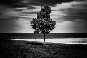 Chicago2016© 2016 Jason Mageau - Image 24361_0114