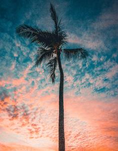 Maui, Hawaii2016© 2016 Jason Mageau - Image 24361_0199