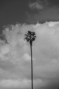 Palm Tree2017© 2017 Jason Mageau - Image 24361_0216