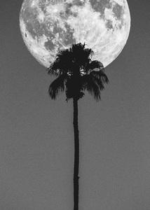 Palm Springs, California2016 © 2016 Jason Mageau - Image 24361_0221
