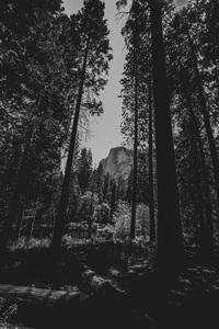 Yosemite National Park, California2016© 2016 Jason Mageau - Image 24361_0336