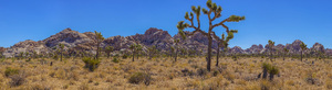 Joshua Tree National Park, California2017© 2017 Viktor Hancock - Image 24366_0023