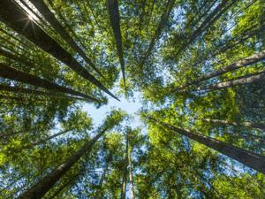 Wallace Falls State Park, Washington2013© 2017 Viktor Hancock - Image 24366_0029
