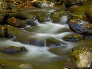 Great Smoky Mountains National Park, Tennessee2016© 2017 Viktor Hancock - Image 24366_0081