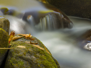 Great Smoky Mountains National Park, Tennessee2016© 2017 Viktor Hancock - Image 24366_0082