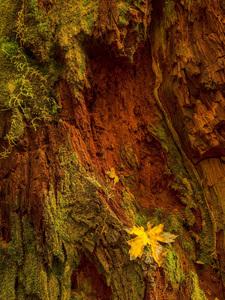 Sol Duc Falls, Olympic National Park, Washington2014© 2017 Viktor Hancock - Image 24366_0131