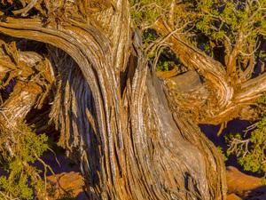 Canyonlands, Utah2012© 2017 Viktor Hancock - Image 24366_0145