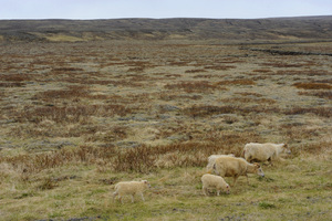 Iceland2015© 2015 Dana Edelson - Image 24367_0014