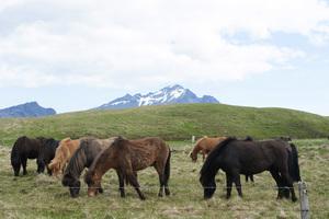 Iceland2015© 2015 Dana Edelson - Image 24367_0035