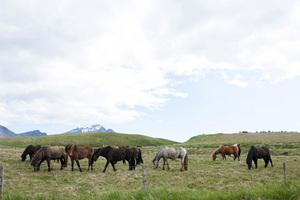 Iceland2015© 2015 Dana Edelson - Image 24367_0036