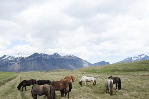 Iceland2015© 2015 Dana Edelson - Image 24367_0037