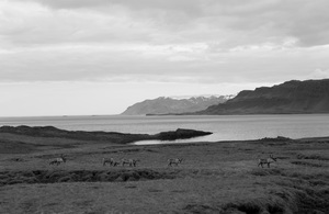 Iceland2015© 2015 Dana Edelson - Image 24367_0039