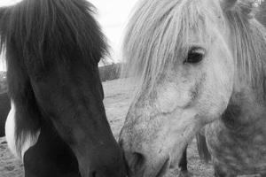 Iceland2015© 2015 Dana Edelson - Image 24367_0055