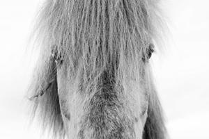 Iceland2015© 2015 Dana Edelson - Image 24367_0061