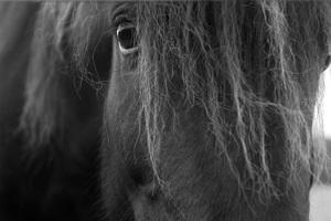 Iceland2015© 2015 Dana Edelson - Image 24367_0064