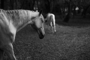 Portugal2016© 2016 Dana Edelson - Image 24367_0100