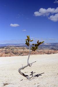 Utah2014© 2014 Dana Edelson - Image 24367_0145