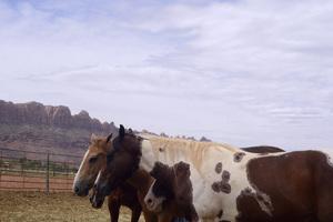 Utah2014© 2014 Dana Edelson - Image 24367_0151