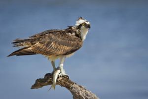 Merritt Island National Wildlife Refuge, Florida2012© 2012 Deede Denton - Image 24368_0030