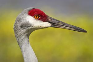 Rich Grissom Memorial Wetlands, Brevard, Florida2013© 2013 Deede Denton - Image 24368_0031