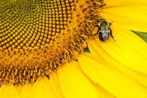 Draper Wildlife Management Area, McConnells, South Carolina2013© 2013 Deede Denton - Image 24368_0032