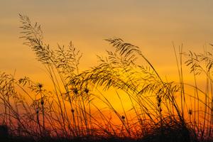 Hatteras, North Carolina2014© 2014 Deede Denton - Image 24368_0045