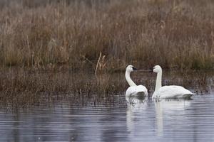 Pocosin Lakes National Wildlife Refuge, North Carolina2015© 2015 Deede Denton - Image 24368_0062