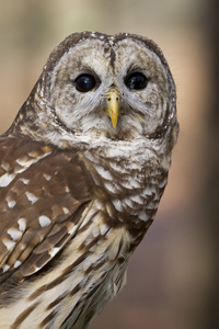 Carolina Raptor Center, Charlotte, North Carolina2015© 2015 Deede Denton - Image 24368_0063