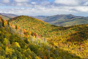 Blue Ridge Parkway, North Carolina2015© 2015 Deede Denton - Image 24368_0103