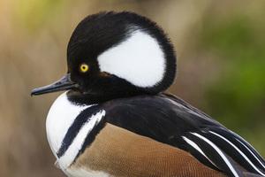 Sylvan Heights Bird Park, Scotland Neck, North Carolina2016© 2016 Deede Denton - Image 24368_0134