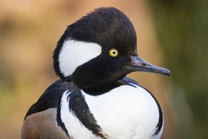 Sylvan Heights Bird Park, Scotland Neck, North Carolina2016© 2016 Deede Denton - Image 24368_0135