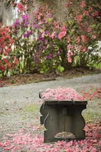 Magnolia Plantation, Charleston, South Carolina2016© 2016 Deede Denton - Image 24368_0137