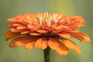 Daniel Stowe Botanical Gardens, Belmont, North Carolina2016© 2016 Deede Denton - Image 24368_0145