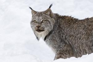 Kroschel Wildlife Center, Haines, Alaska2016© 2016 Deede Denton - Image 24368_0149