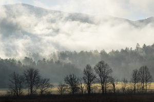 Cades Cove, Great Smoky Mountains National Park, Tennessee2017© 2017 Deede Denton - Image 24368_0172