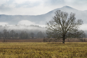 Cades Cove, Great Smoky Mountains National Park, Tennessee2017© 2017 Deede Denton - Image 24368_0173