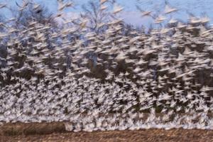 Pocosin Lakes National Wildlife Refuge, North Carolina2016© 2016 Deede Denton - Image 24368_0207